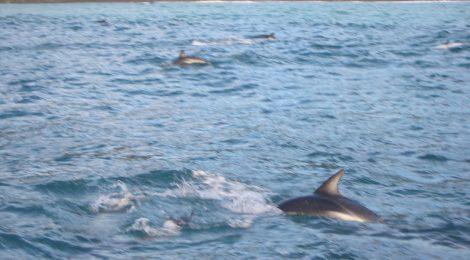 #11 Swim with dolphins