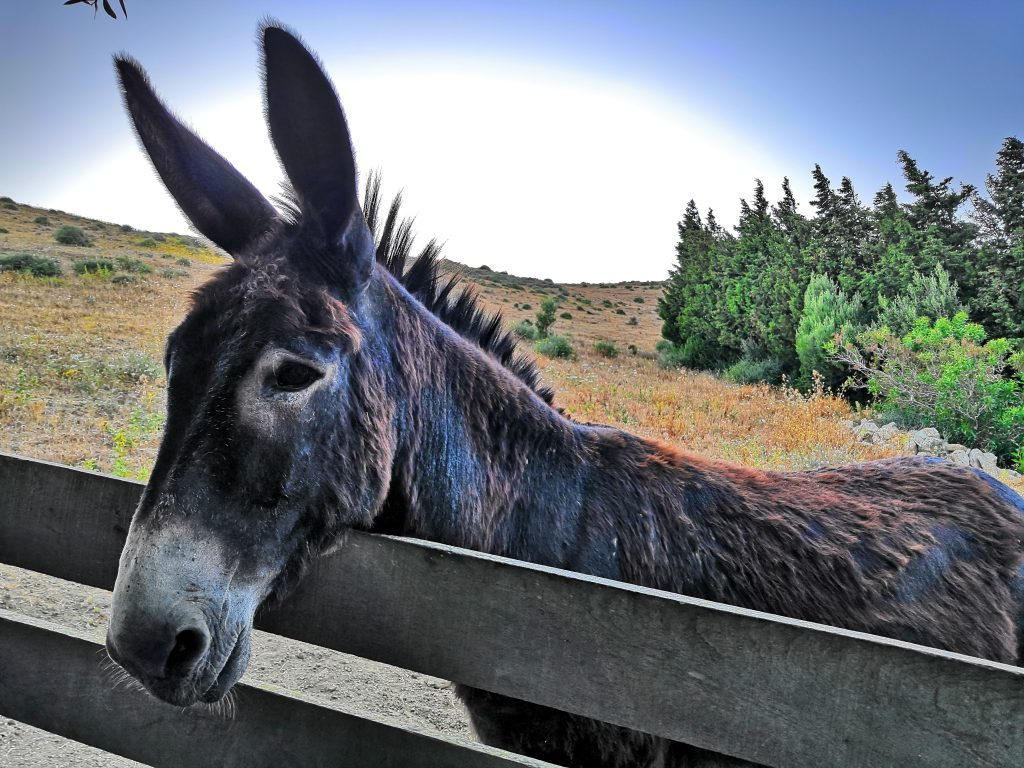 The resident donkey at Yurts Tarifa