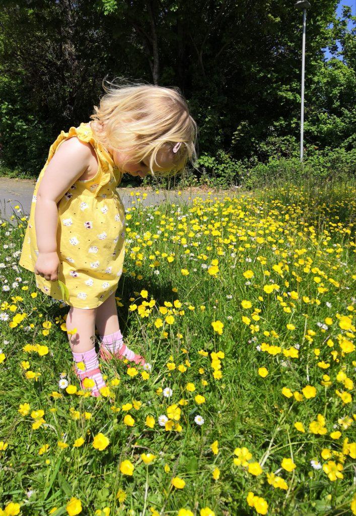Toddler admiring buttercups