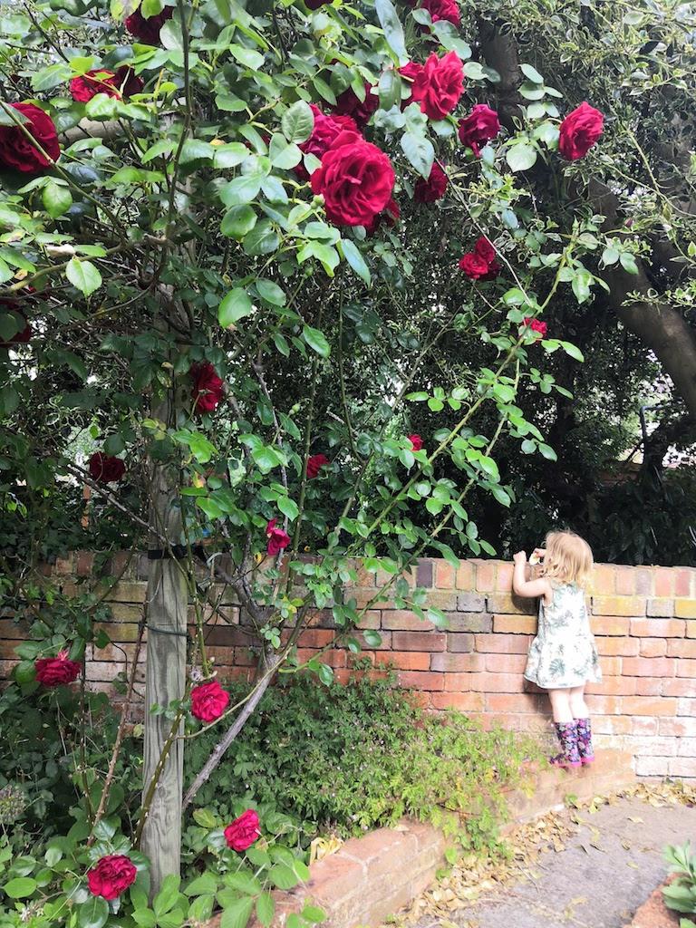 Toddler looking over garden wall