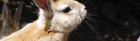 Visiting Ōkunoshima aka Rabbit island in Japan
